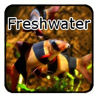 Freshwater Fish Tank Supplies